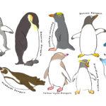 だいすきなペンギンたち。みーんな集合させました。次は子供も描きたいな。